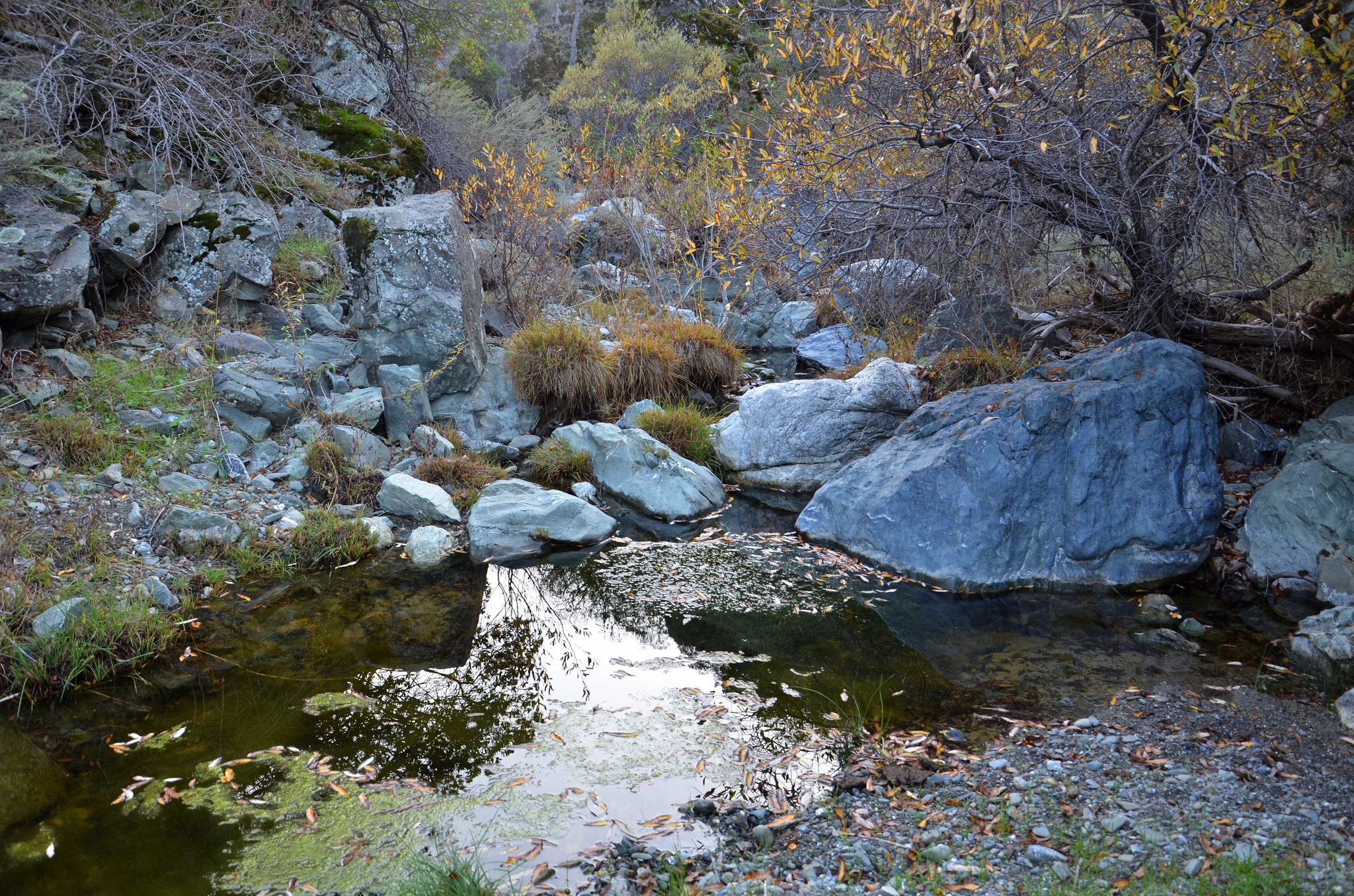 Corral Hollow Creek in Tesla