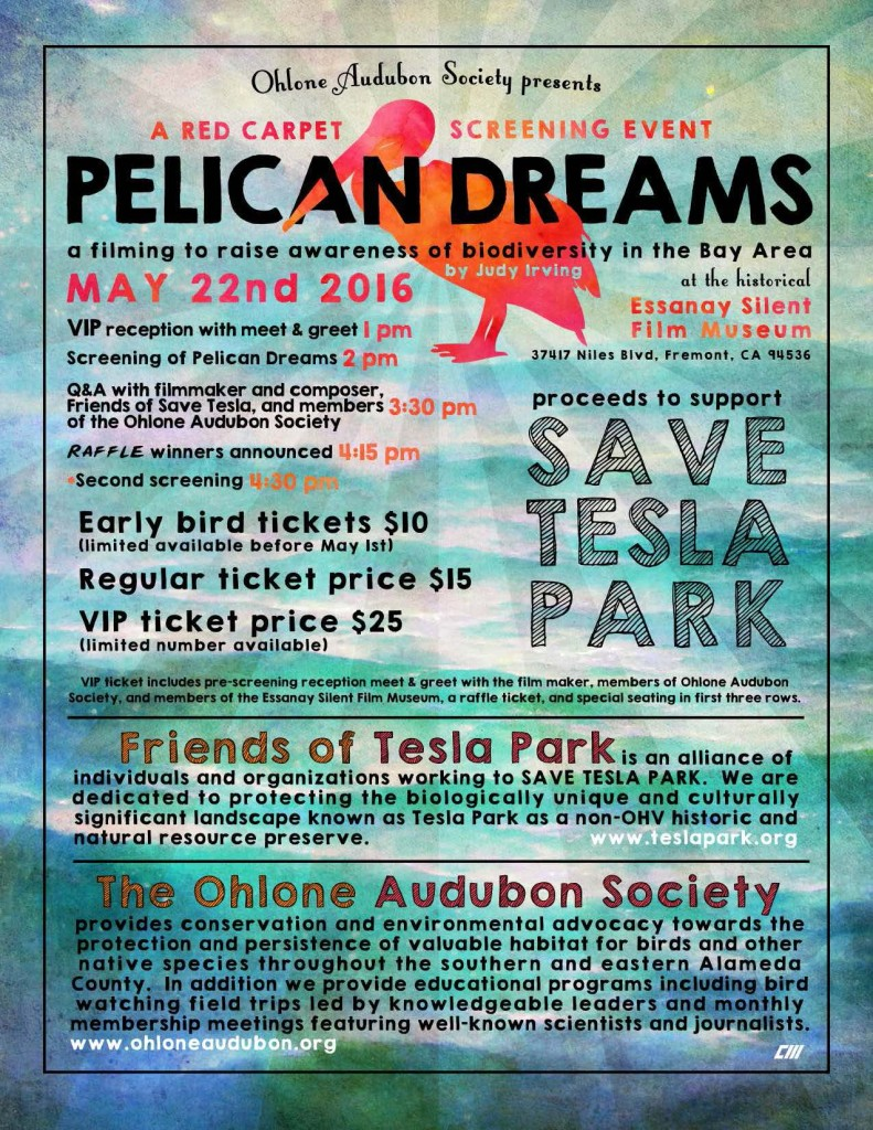 Pelican dreams poster