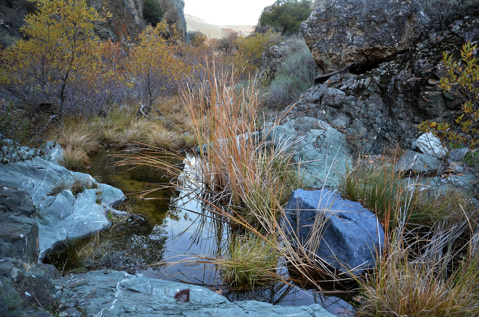 tesal-park-corral-hollow-creek-wilds-in-fall